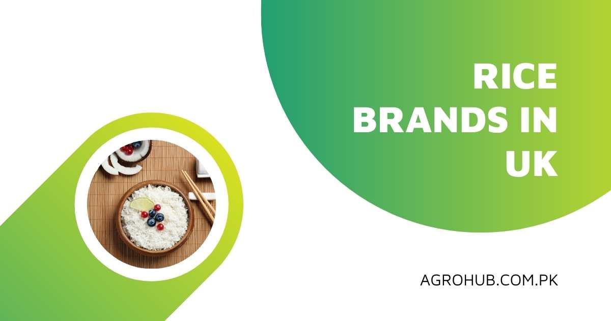 Best Basmati Rice Brand UK